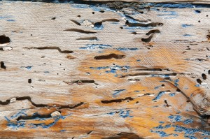 termite damaged wood, termite damage